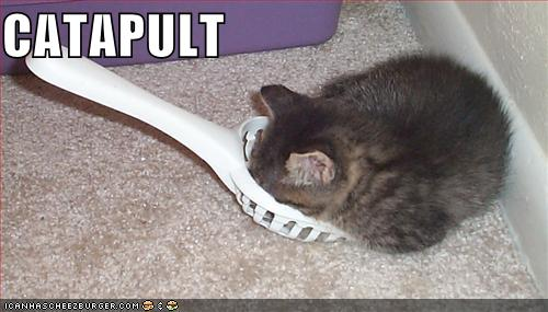 Cat in a Catapult